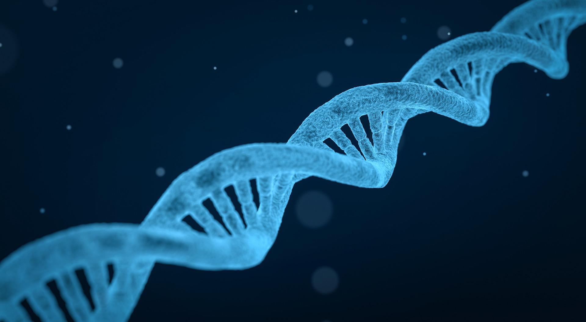 Emery Dreifuss DNA